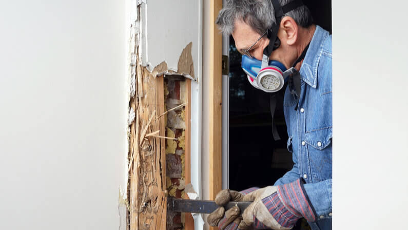removing termites on damaged walls/wood in the house