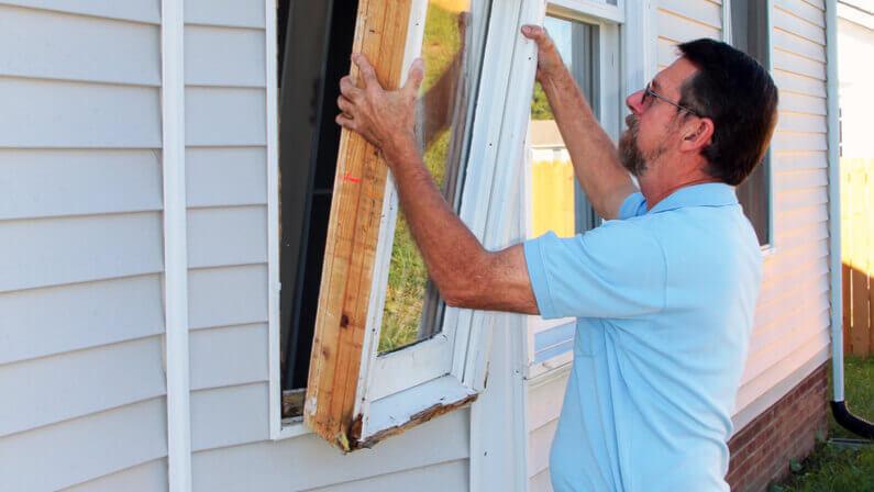 termite damaged wood window replace